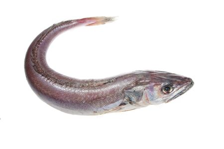Ganze Seehecht Fisch isoliert auf wei�em Hintergrund