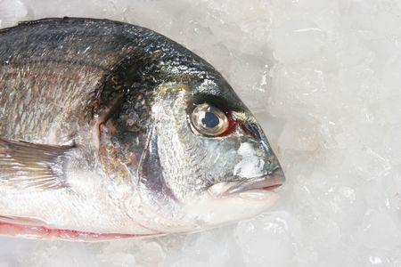 gilt head: Closeup of gilt head sea bream fish on ice Stock Photo