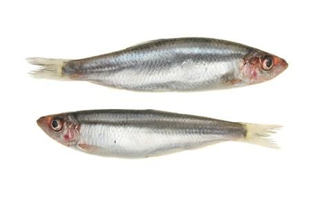 Paar Sprotte Fisch isoliert auf wei�em Lizenzfreie Bilder