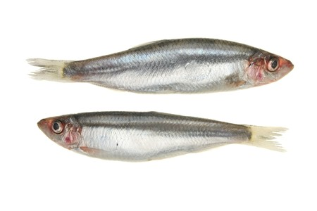Pair of Sprat fish isolated on white