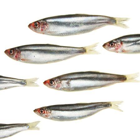 Eine Gruppe von Sprotte Fische scheinen zu schwimmen und aus dem Rahmen Lizenzfreie Bilder - 4370568