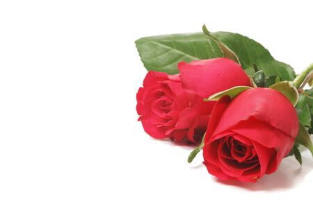Two red roses with white copy space to the left Stock Photo