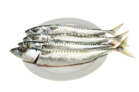 mackerel: Four fresh mackerel fish on a plate against white