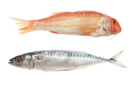 mullet: Red mullet and mackerel fish on white