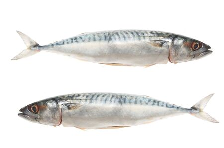 Two mackeral fish isolated on white photo
