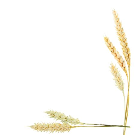 crop  stalks: Wheat ears as a frame and border Stock Photo