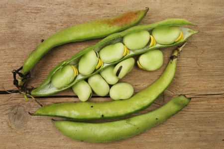 homegrown: Freshly picked homegrown broad beans on old weathered wood
