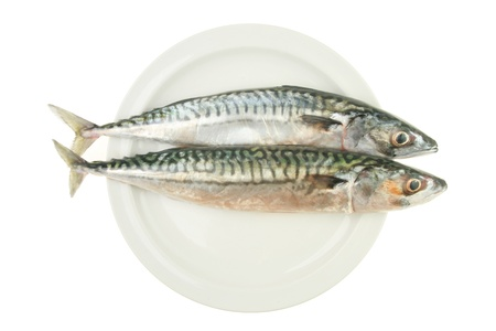 Two fresh whole mackerel fish side by side on a plate isolated against white photo