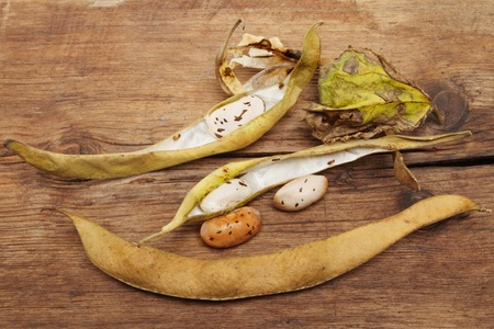 runner bean: Runner bean seeds and dried pods on a background of weathered wood