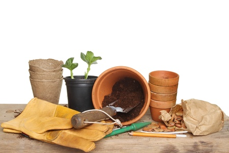 Gardening themed still life, garden tools, seedling plant, pots, compost and seeds on a wooden potting bench photo