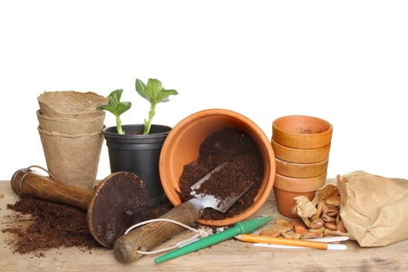 Garden tools, terracotta plant pots, soil, seeds and a seedling plant on a wooden potting bench photo
