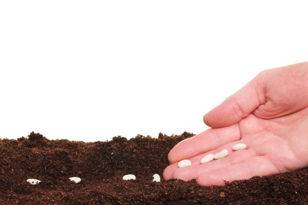 Closeup of a hand planting seeds into a furrow in soil against a white background