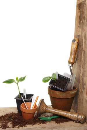 tamper: Portrait shot of a garden potting bench with plant seedlings and tools against a white background
