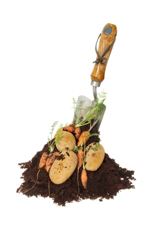 Fresh carrots and potatoes in a pile of soil with a garden fork isolated against white Stock Photo - 17715354