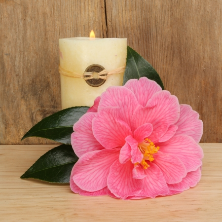 Camellia flower and burning Feng Shui candle against a wooden background  photo