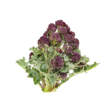 sprouting: Purple sprouting broccoli isolated against white