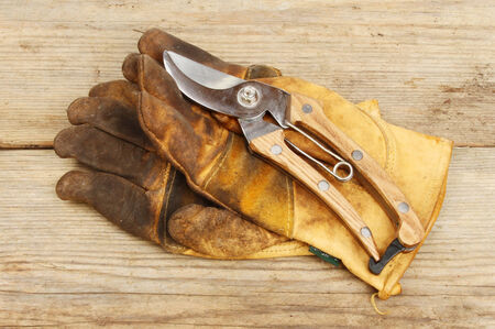 secateurs: Secateurs and leather gardening gloves on a wooden board Stock Photo