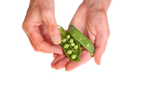 shelling: Pair of hands shelling fresh peas isolated against white