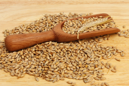 wooden scoop: Barley in and around a wooden scoop on a wooden board