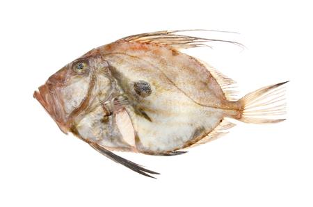 Fresh raw John dory fish isolated against white Stock Photo