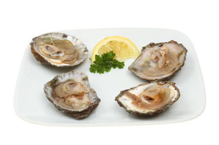 shucked: Raw oysters in shells with lemon and parslet on a plate isolated against white