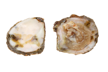 shucked: Shucked raw British native oyster in shell isolated against white