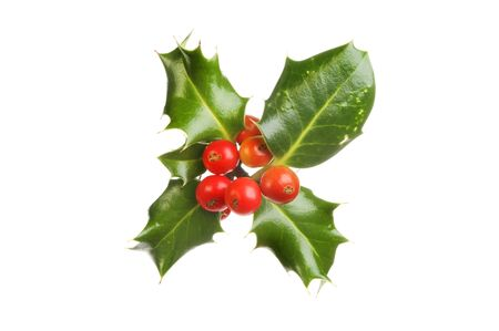 holly: Sprig of holly with ripe red berries isolated against white