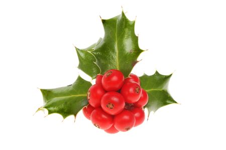 sprig: Sprig of Holly with red ripe berries isolated against white