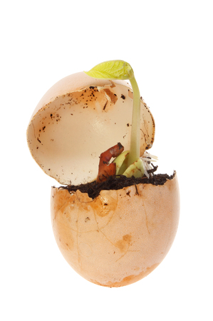 runner bean: Plant seedling growing out of an egg isolated against white Stock Photo