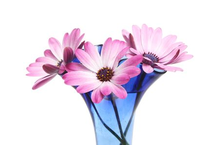 Closeup of three Osteospermum flowers in a vase isolated against white