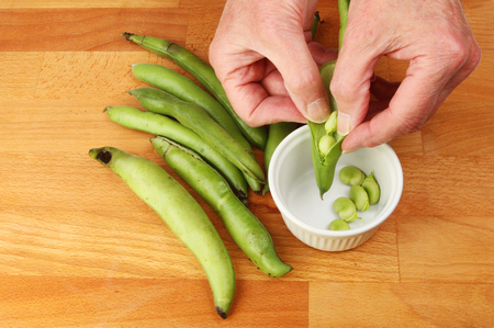 Closeup of hands shelling broad beans Stok Fotoğraf