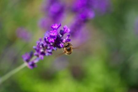 honing: Landende bij