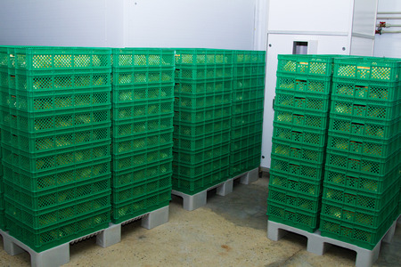 hatchery: Boxes with newly hatched chicks on a chicken farm