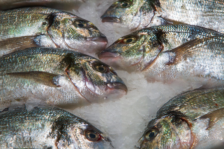 gilthead: Gilthead (Sparus aurata) on ice decorated for sale at market