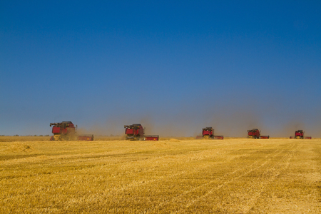 Combine harvester on a wheat field at harvest time