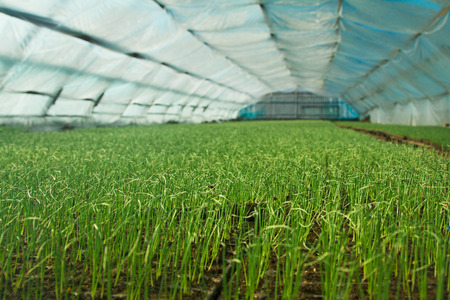 Organic greenhouse. A look into a greenhouse