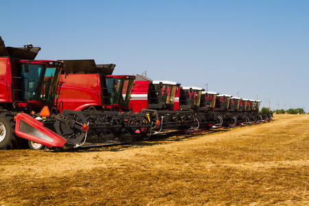 harvesters: Combine harvesters, in a wheat field ready for harvest