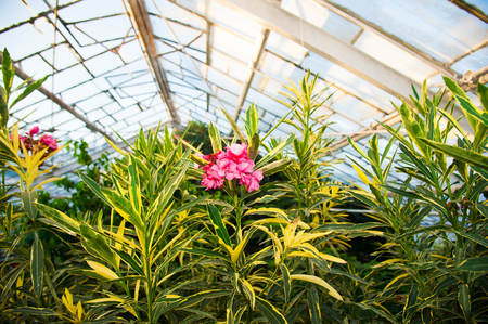 conservatory: Greenhouse with a variety of plants and flowers