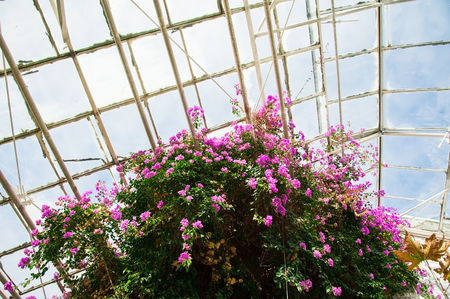 Greenhouse with a variety of plants and flowers