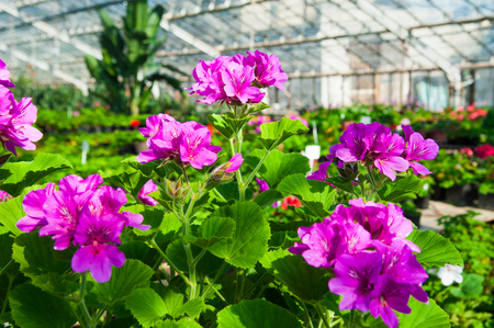 glasshouse: Greenhouse with a variety of plants and flowers