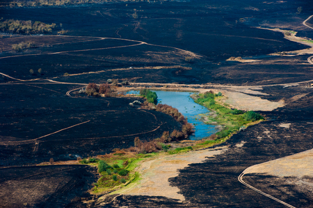 Scorched trees and grass after the fire. Aerial view. Landscape 版權商用圖片