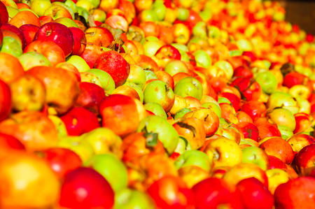 Ripe apples being processed and transported in an industrial production facility. Food industry. Textured background.