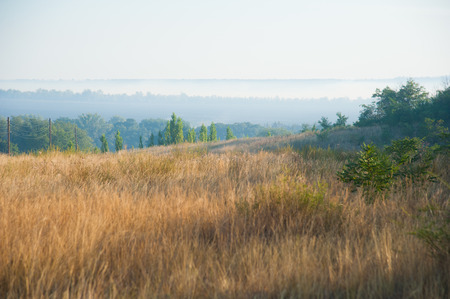 Burnt grass, the scorched earth, fire, disaster, landscape fire Stock Photo
