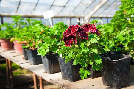 Kas met een verscheidenheid aan planten en bloemen