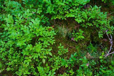 Forest Soil with Grass. Top view forest ground with plants