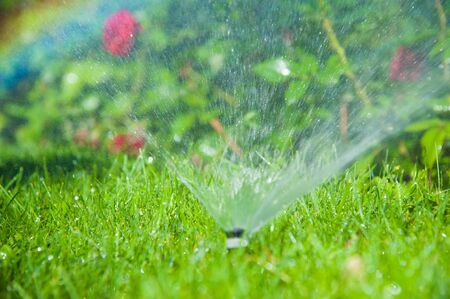 Watering lawn and rose flowers smart garden activated with full automatic sprinkler irrigation system working early in the morning in park Banque d'images