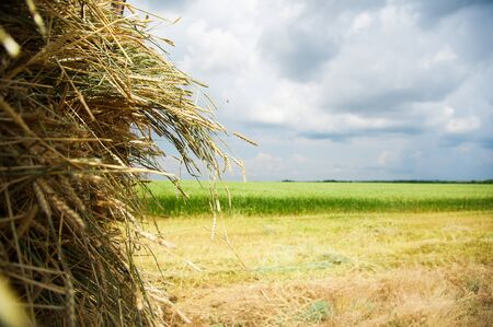 The hay storage shed full of bales hay on farm Фото со стока