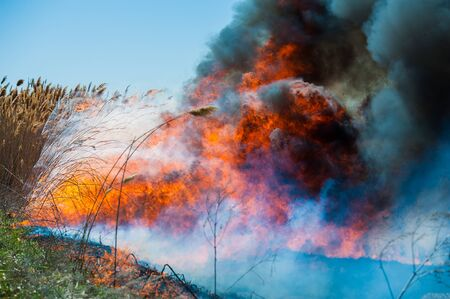 Raging forest spring fires. Burning dry grass, reed along lake. Grass is burning in meadow. Ecological catastrophy. Fire and smoke destroy all life. Firefighters extinguish Big fire. Lot of smoke