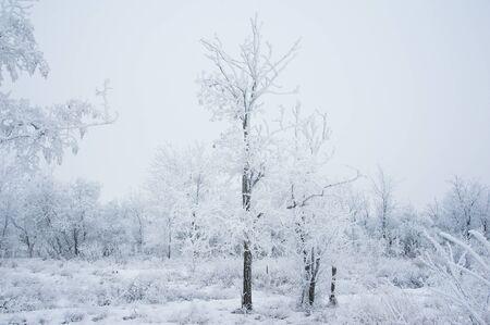 Paisaje de invierno Árboles de invierno en la nieve Foto de archivo