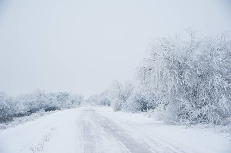 Winter landscape. Dirt road in the forest in winter